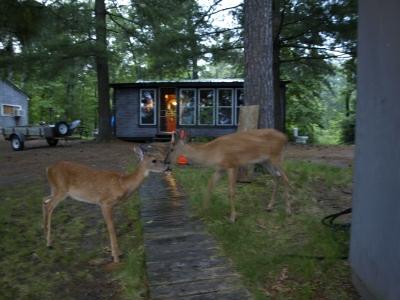 13-deer