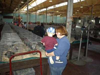 2-chickens