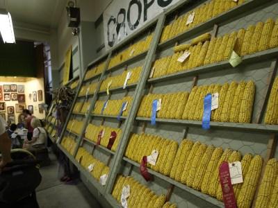 5-competitive corn
