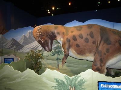 8-pachycephalosaurus